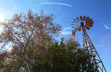 Bob-Quattlebaum-Windmill-Walnut-CA